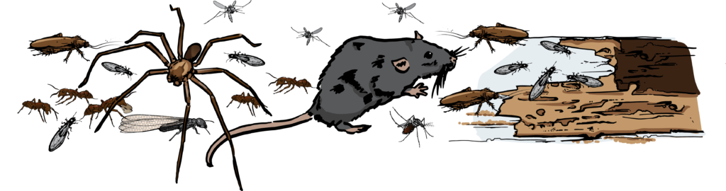OPC-5 Reasons to Choose OPC Pest Services