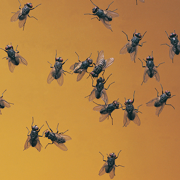 OPC Pest Control Fly Control
