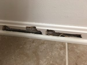 termite damage to baseboard
