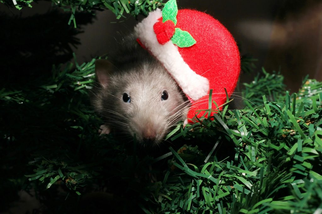 OPC Pest - Christmas Mouse