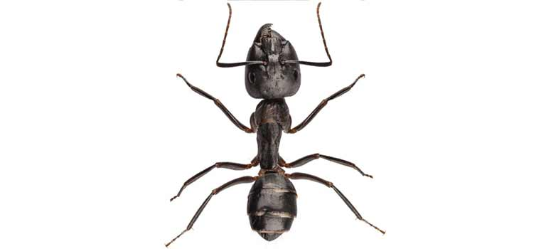 OPC-Pest-Control-Ants-Header-Mobile
