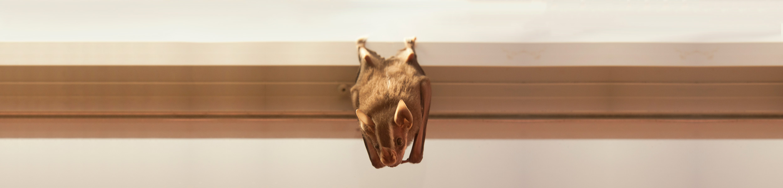 OPC-Pest-Control-Bat-In-House-Header-Comparison