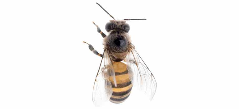 OPC-Pest-Control-Bee-Header-Mobile