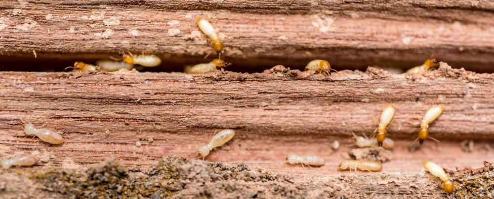 OPC Pest Control - Home Slider - Termites Ruin Homes