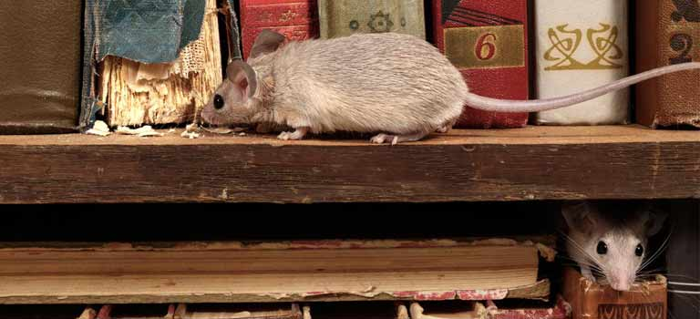 OPC-Pest-Control-Rodents-Mouse-Rat-Damge-Eating-Books-Header-Mobile