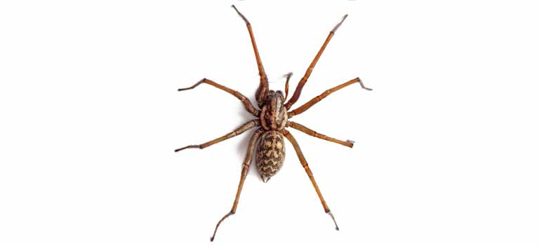 OPC-Pest-Control-Spiders-Header-Mobile