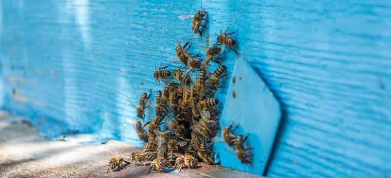 OPC-Pest-Services-Bees-Swarm-Hole-Header-Mobile