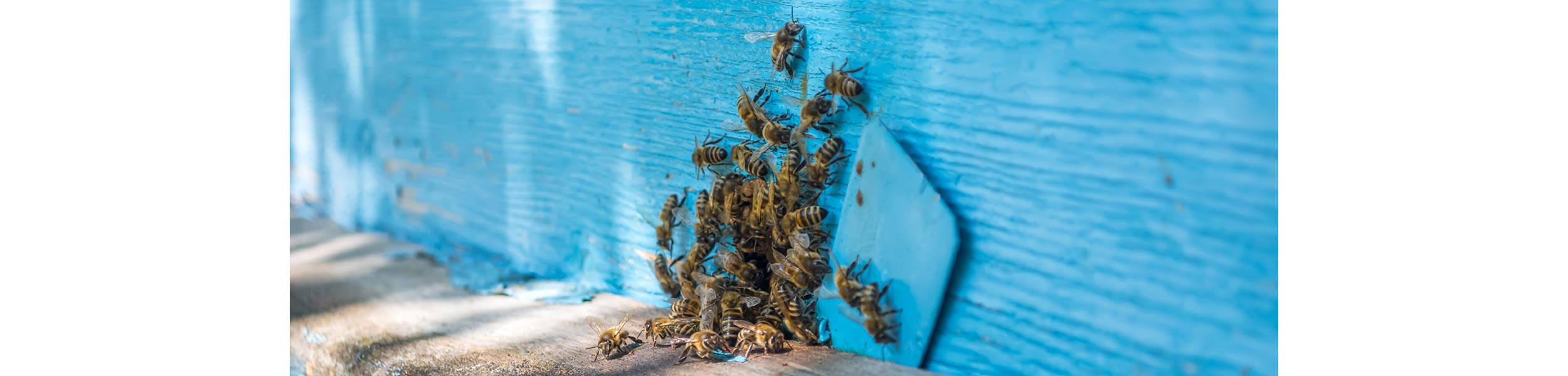 OPC-Pest-Services-Bees-Swarm-Hole-Header