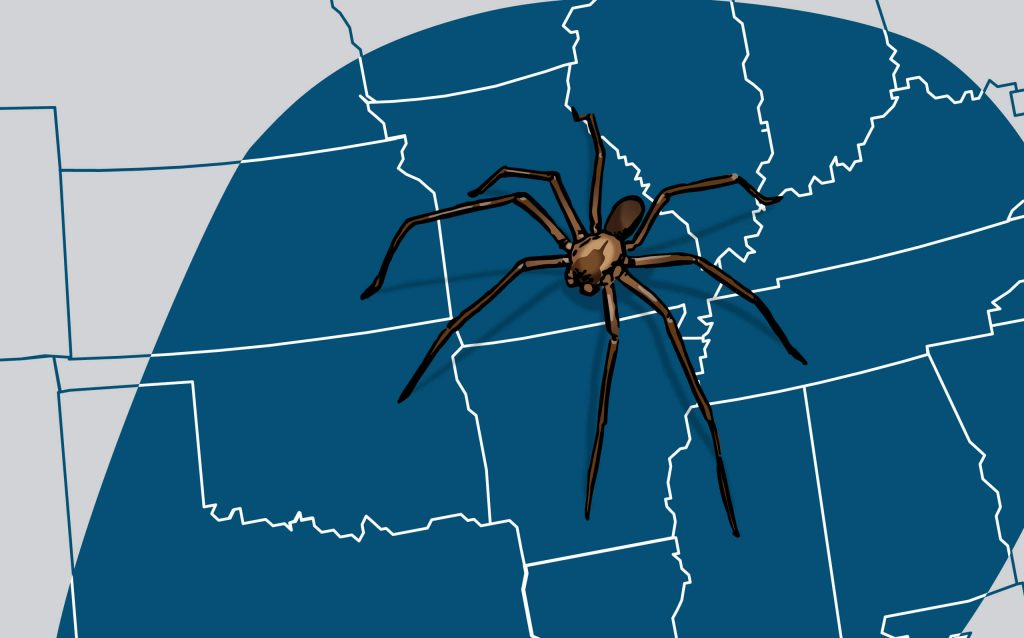 OPC Pest Services - Brown Recluse Spiders