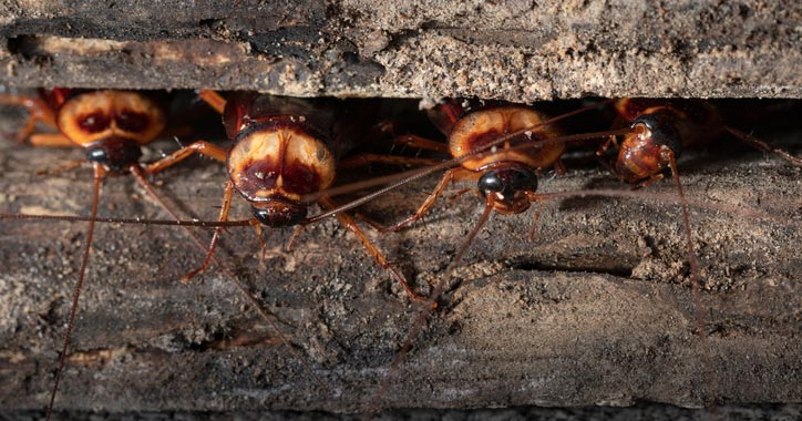 Image result for roaches