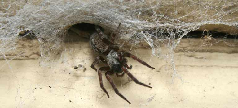 OPC-Pest-Services-Spiders-Coming-Out-Of-Hole-Header-Mobile