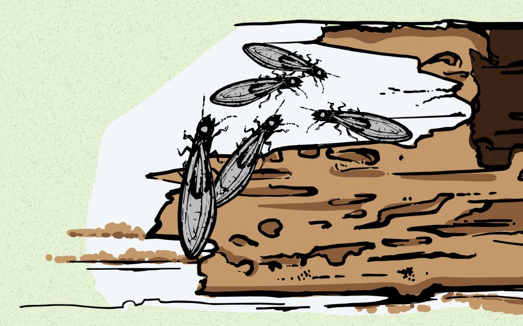 OPC Pest Services - Termite Swarms