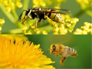 OPC Pest Services - Wasps Bees Differences Blog